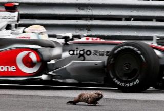 hamilton mclaren groundhog